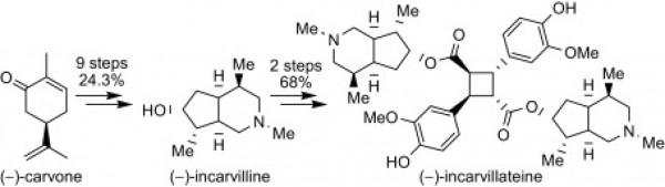 3. Fengying Zhang, Y. J., Total synthesis of (-)-incarvilline and (-)-incarvillateine. Tetrahedron 2009, 65, (34), 6840-6843.